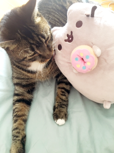 *I spent too much time on Monday morning trying to get Bear and Pusheen to be friends. He was not amused.